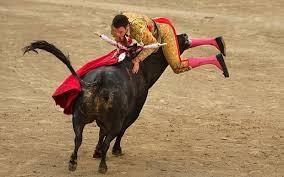 bull4
